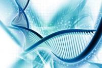 Pas d'expertise génétique sans action en recherche de paternité de l'enfant